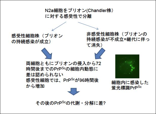Images of ビスナウイルス - Jap...
